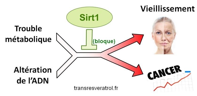 resveratrol sirt1